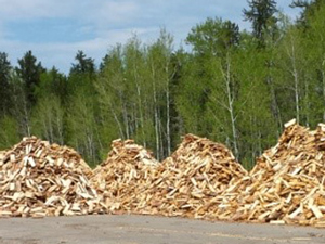 photo of large piles of firewood